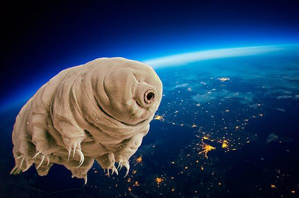ASTRONAUTI BESTIALI. L'insospettabile ruolo degli animali nello spazio